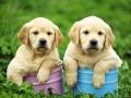 een tweeling